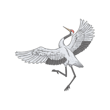 Japanese style white bird dancing in courtship, asian crane with open wings in elegant position, hand drawn flat vector illustration isolated on white background