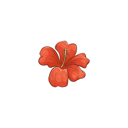 Orange hibiscus hawaiian tropical flower in blossom vector illustration isolated on white background. Beautiful exotic summer plant hand drawn icon in sketch style. Illustration
