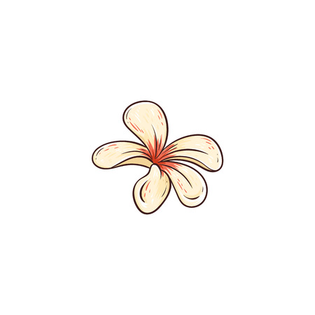 Plumeria rubra hawaiian tropical flower in blossom vector illustration isolated on white background. Beautiful exotic summer plant hand drawn icon in sketch style.