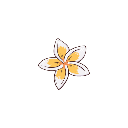 White and yellow plumeria or frangipani flower sketch style, vector illustration isolated on white background. Hand-drawn hawaiian lei flower, tropical nature plant Ilustração