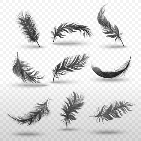 Conjunto de estilo realista de plumas negras mullidas que caen o flotan, ilustración vectorial aislado sobre fondo transparente. Plumas de pájaro oscuro y suave flotando en el aire por encima de la superficie con sombras Ilustración de vector