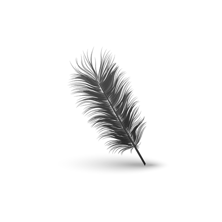 Black falling fluffy straight without bending a feather or bird plume element 3d realistic vector illustration isolated on white background with clearly defined contour and shadows.