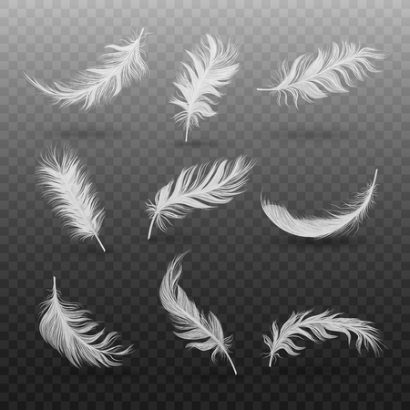 Set of falling or hovering white fluffy feathers realistic style, vector illustration isolated on black transparent background. Light soft bird feathers floating in air above surface with shadows