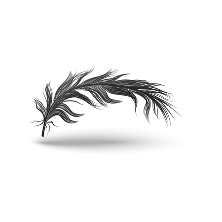 Black bird feather isolated on white background, dark mysterious wing plume floating light in air curved horizontally, single object in realistic hand drawn style, vector illustration