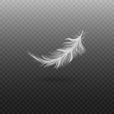 White bird feather isolated on transparent background, realistic fluffy swan plumage floating in air, smooth wing quill falling and flying - vector illustration