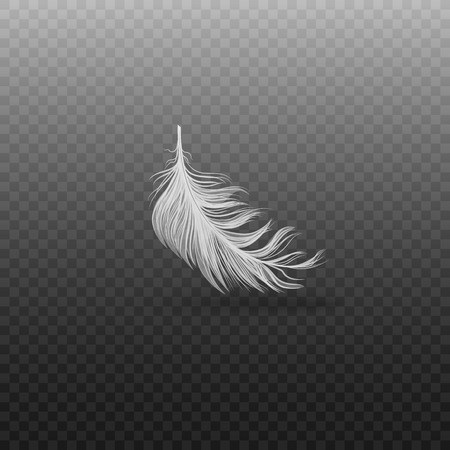 Falling and soft realistic white bird feather with fluff on a transparent background. Realistic single flying swan or goose feather, vector illustration.  イラスト・ベクター素材