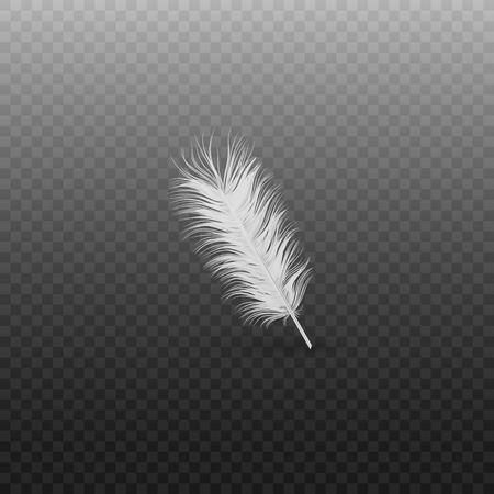 Soft realistic white bird feather with fluff of swan or goose on a transparent background, single vector illustration.