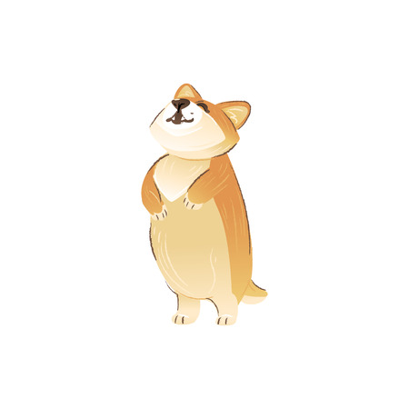 Cute Welsh Corgi dog stands on hind legs with front ones raised up cartoon style, vector illustration isolated on white background. Funny puppy pet sniffing around standing on rear paws