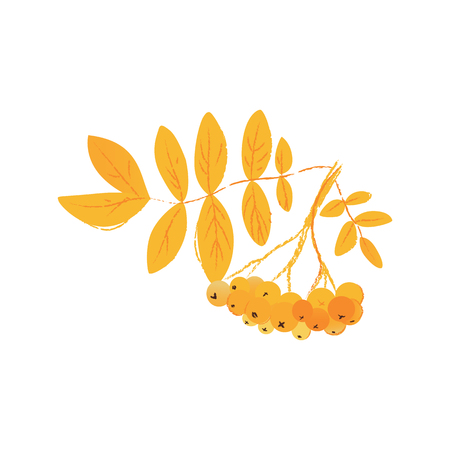 Branch of rowan tree with leaves and berries bunch cartoon flat style, vector illustration isolated on white background. Twig of Sorbus aucuparia or mountain ash tree, autumn or fall nature Ilustração