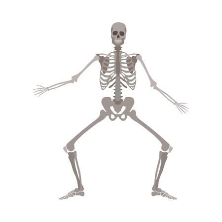 Human skeleton standing with legs bent and arms apart cartoon flat style, vector illustration isolated on white background. Funny skeleton dancing with knees bent, Halloween concept