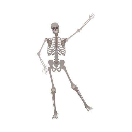 Human skeleton standing on one leg with arm raised up cartoon flat style, vector illustration isolated on white background. Funny skeleton in dancing pose, Halloween concept