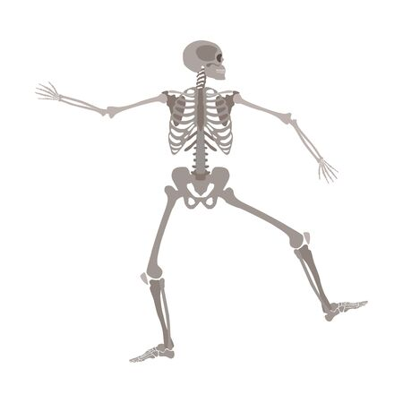 Human skeleton standing on one leg with arms apart cartoon flat style, vector illustration isolated on white background. Dancing funny skeleton with skull in profile side view, Halloween concept Illustration