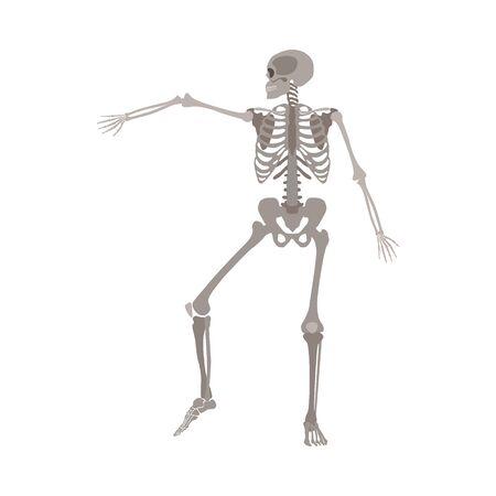 Esqueleto humano bailando, modelo de anatomía del cuerpo médico con el hueso del brazo levantado en movimiento dinámico, ilustración de vector plano de dibujos animados realista aislado sobre fondo blanco Ilustración de vector
