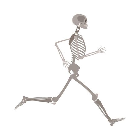 Full-length running human skeleton cartoon flat style, vector illustration isolated on white background. Anatomy of male or female skeleton during jogging or run sports exercise Archivio Fotografico - 128171471