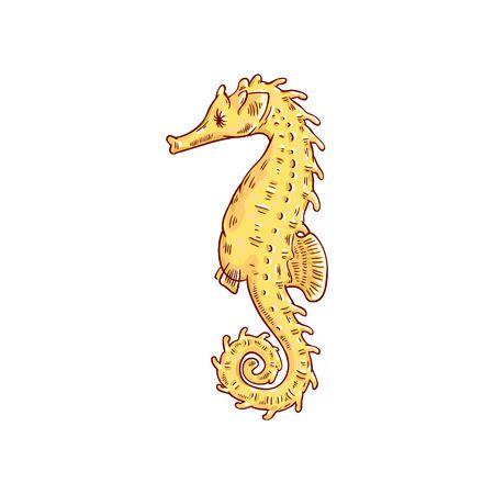 Hand drawn seahorse, marine and oceanic animal underwater tropical world-a vector illustration