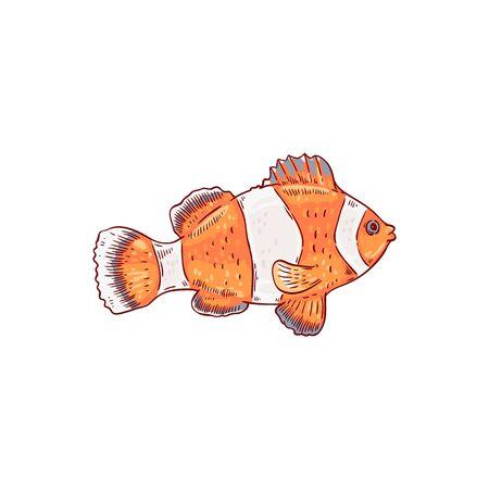 Sea and ocean orange and white striped clownfish. Tropical clown fish, ocean wildlife and nature. Aquarium cute pet, hand drawn vector illustration.