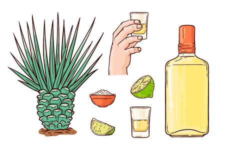 Tequila set with a bottle of Mexican alcohol from agave cacti and a glass in hand, slices of lime and salt. Isolated tequila alcohol drink set of vector illustrations on a white background.