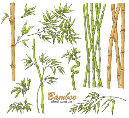 Bamboo sticks and leaves vector illustration set in sketch style - hand drawn green and brown traditional asian plant stems with foliage isolated on white background for natural design. Çizim