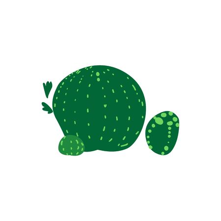 Big round green barrel cactus plant with sharp thorns. Simple vector illustration with flat botanical elements isolated on white background