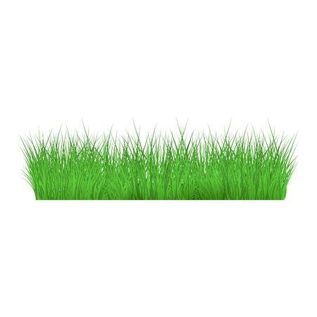 Été, herbe verte printanière et bordure de pelouse sur fond isolé dans un style réaliste, illustration vectorielle.