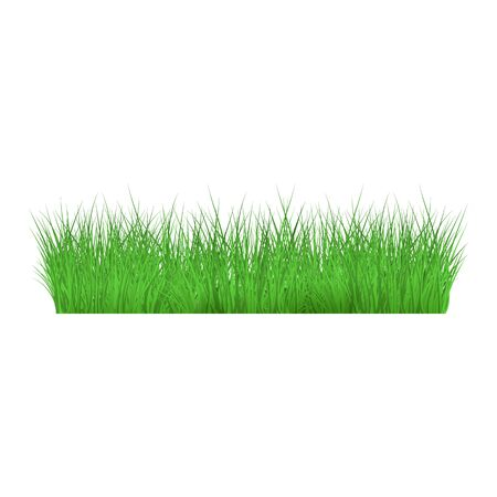 Summer, spring green grass and lawn border on isolated background in realistic style, vector illustration.