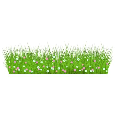 Summer, spring floral lush green grass and lawn border on isolated background in realistic style. Vector illustration with flowers, daisies.