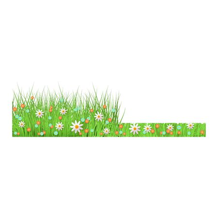 Summer, spring floral lush green grass and lawn border on isolated background in realistic style, vector illustration with flowers. Floral grass before and after mowing, vector illustration.