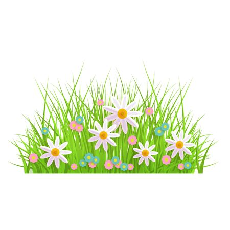 Spring floral green grass and lawn border on isolated background in realistic style with chamomile and daisies. Summer meadow flowers. Floral vector illustration. Иллюстрация