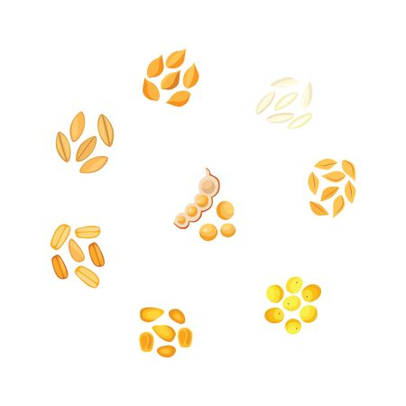 Vector illustration set of bunches different types of grains in flat style for eco farming organic healthy food concept. Various cereal plants seeds isolated on white background.