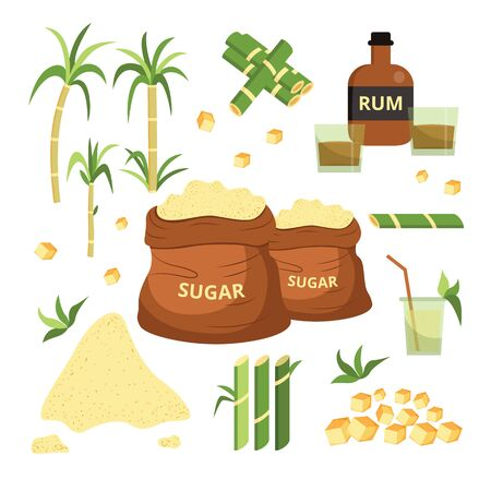 Sugar cane drawing set - isolated sugarcane plant with green leaves and separate stalks, rum bottle with sweet drink glass, granulated and cubed sugar sack - flat hand drawn vector illustration Stock Vector - 128505110