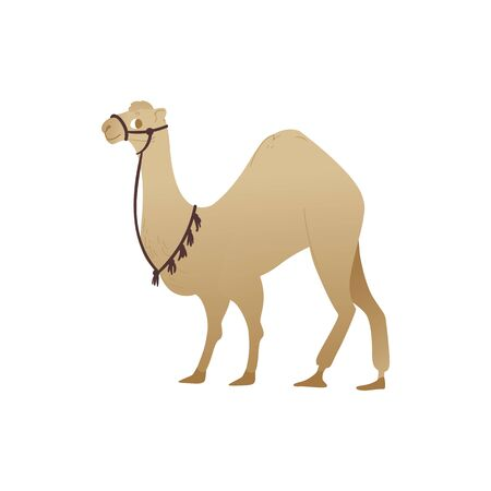 Desert animal camel the oriental and arabic fairy tale character and traditional tourist symbol flat cartoon vector illustration isolated on white background.