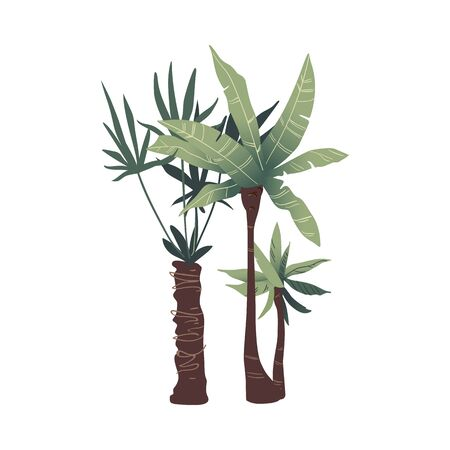 Two tropical green palm trees with leaves. Exotic palm tree plant. Isolated flat cartoon flora and nature vector illustration.