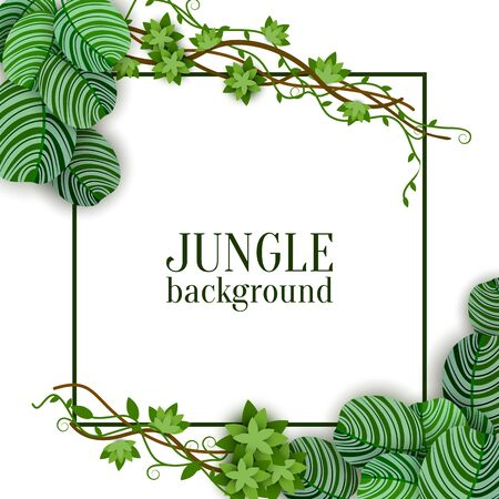 Tropical jungle exotic lianas vine and green palm leaves banner with space for text and square frame the fashion vector illustration isolated on white background.