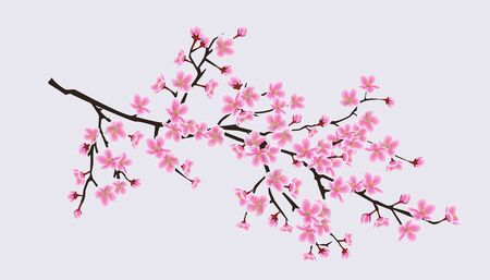 Cherry blossom sakura tree branch with realistic pink flowers - beautiful realistic spring symbol with decorative floral petals. Isolated vector illustration. 向量圖像