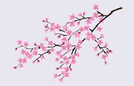Ramo di sakura in fiore con fiori, fiori di ciliegio, concetto di primavera floreale. Fiori dell'albero di sakura giapponese e asiatico. Illustrazione vettoriale realistica di sakura. Vettoriali