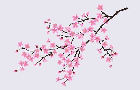 Branch of blooming sakura with flowers, cherry blossom, floral spring concept. Japanese and asian sakura tree flowers. Realistic vector illustration of sakura. Illustration