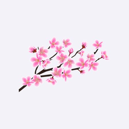 Blooming sakura branch with flowers, cherry tree. Japanese sakura branch flowers, realistic vector floral illustration. Illustration