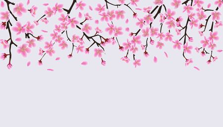 Upper frame border of the banner with blooming flowering branches of cherry or japanese sakura vector illustration isolated on background. Spring and wedding backdrop.