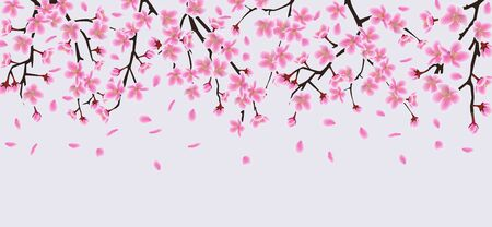 Sakura tree flower branches with realistic pink petals falling down, beautiful cherry blossom top border element for spring banner - isolated vector illustration Illustration