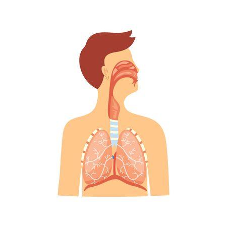 Esquema médico educativo anatómico de la ilustración de vector de sistema respiratorio aislado sobre fondo blanco. Diafragma y tráquea, diagrama de caja torácica y pulmones.