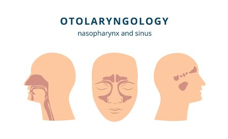 Otolaryngology - ear, nose and throat health drawing set with human head in profile and front view showing nasopharynx and sinus parts, isolated flat vector illustration on white background