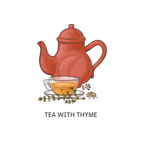 Tea with thyme - healthy herbal drink in glass teacup and red teapot. Hot herb beverage made from fresh green leaf twigs and seeds, isolated hand drawn vector illustration