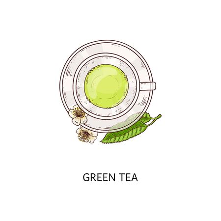 Green tea drawing - top view of a glass cup with hot healthy drink with leaves and flowers, teacup and plate traditional ceremony arrangement isolated on white background, vector illustration