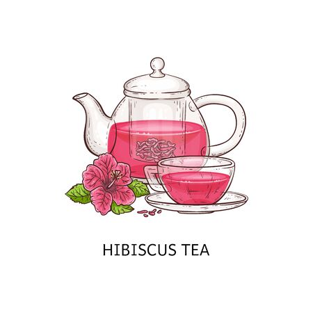Hibiscus tea - pink drink in glass cup and teapot isolated on white background with pretty flower leaves, hand drawn vector illustration of healthy herbal beverage.