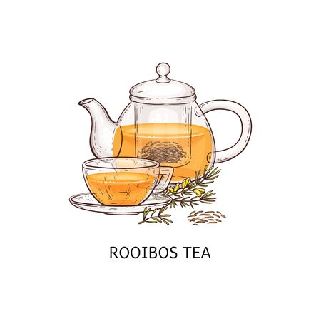 Rooibos tea drawing - glass teapot and teacup filled with traditional natural drink with orange color, brown and yellow plant twig made into hot beverage - isolated hand drawn vector illustration