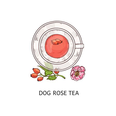 Dog rose tea in glass teacup and plate duo, beautiful fruit and berry drink drawing with flower and plant arrangement from top view, isolated vector illustration on white background