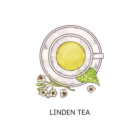 Linden tea in glass cup - cute drawing of healthy herbal drink in teacup and plate combo with flower and leaf arrangement from top view, isolated vector illustration