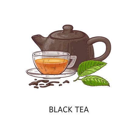 Black tea composition drawing - hot herbal drink in glass cup with teapot and green leaves, loose leaf healthy beverage - hand drawn isolated vector illustration