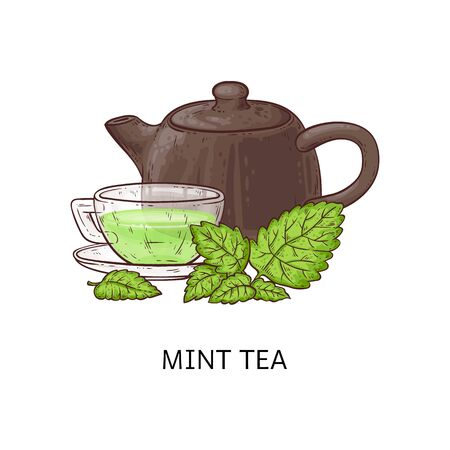 Mint tea drawing - glass cup with healthy green beverage, brown teapot and leaves isolated on white background, traditional hot drink - hand drawn cartoon vector illustration