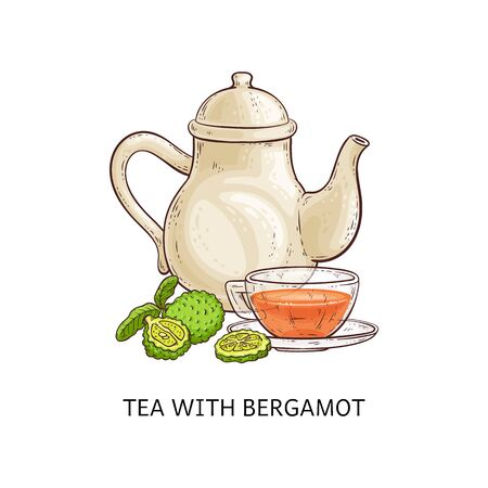 Tea with bergamot - healthy hot beverage in glass teacup and tall teapot made from green citrus fruit, traditional earl grey herbal drink, isolated hand drawn vector illustration